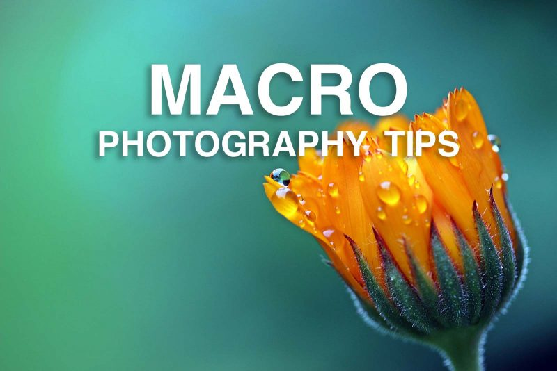 Macro Photography Allows Us To Explore A Tiny Miniature World For Nature Photos Usually Feature Bugs Plants And Other Small Details