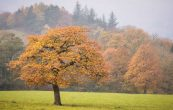 6 Ways to Take Better Autumn Landscape Photos
